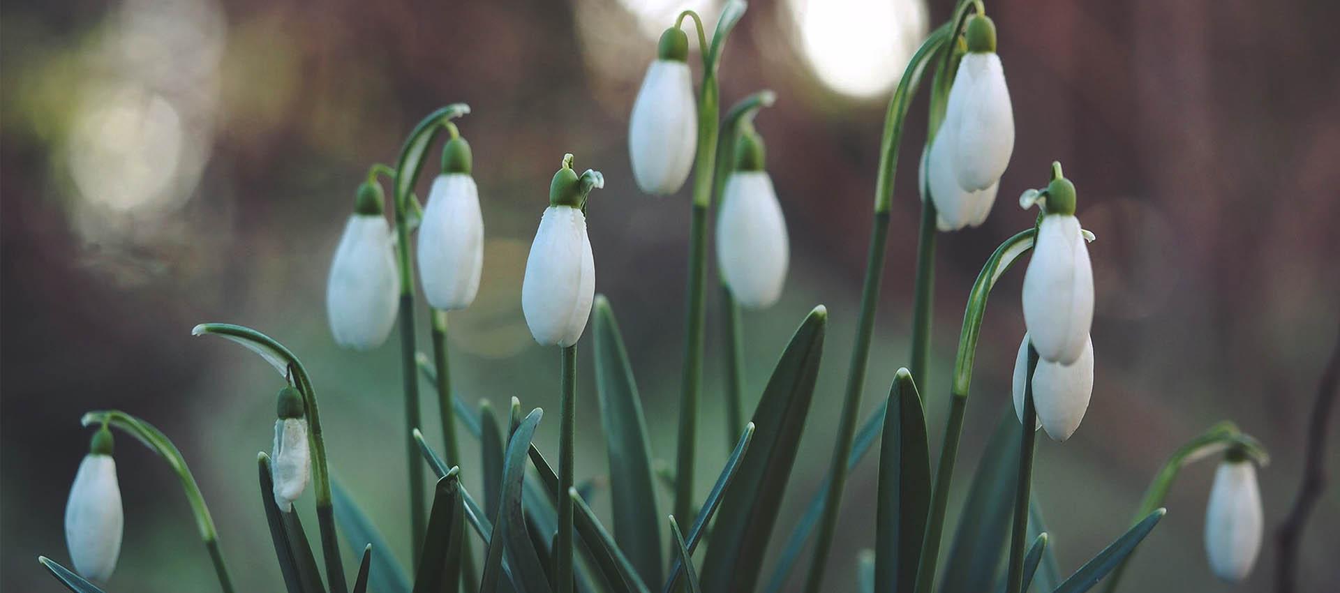 Astronomiczna wiosna!
